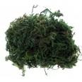 Mousse végétale sachet 50 grammes